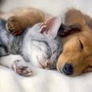 動物保護ボランティア