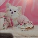 犬服 縫製 内職