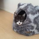 キャリア猫オス1~3歳懐っこい子です!ワンコと同居可能!