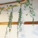 ◆流木インテリア オブジェ グリーン ナチュラル ガラス瓶 電球型...
