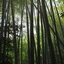 竹やぶの竹を差し上げます。