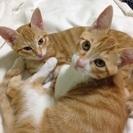 元気で可愛い目をした子猫2匹の里親募集です