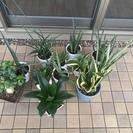 観葉植物いろいろ