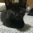 お願いします!!子猫及び猫の里親募集致します。