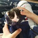 生後2週間程 子猫