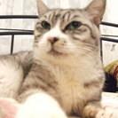 😻猫カフェ作りを一緒に楽しんでいただける方♪DIYやインテリア好き...