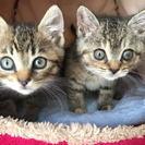 1ヶ月半くらいの子猫保護してます。大切に飼ってくださる方、お願いします。