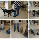 Mika Ishiwataの犬クラス☆★☆金曜日クラス(今月のテー...