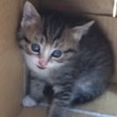 産まれて一ヵ月。一番可愛い時期の子猫です。