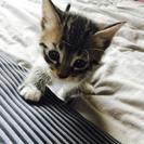 子猫の里親になってください。
