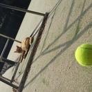 【テニス】大阪★ヒッティングパートナー(プライベートレッスン)