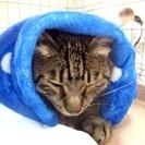 6月10日(土) 猫の譲渡会 名古屋市港区 競馬場会館  みなと猫...