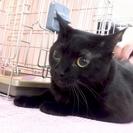 6月25日(日) 猫の譲渡会 名古屋市守山区 もりやま犬と猫の病院...