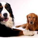 【成約済】郡山市賃貸|大型犬・猫ペット複数OK |便利な場所ですよ |