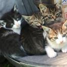 お庭に居る仔猫ちゃん達です