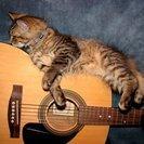 日本一優しいギター講師が教える【初心者向けギター教室】 ※猫スタッ...