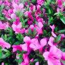 花の咲き方咲かせ方  魔法の音楽レッスン