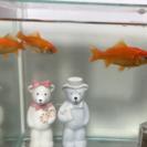 【元気な金魚】和金3匹