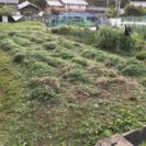 家庭菜園レンタル(値下げ) 約85平方m