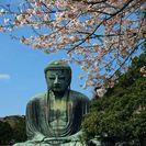 一緒に鎌倉のお寺や、遺跡巡りしてく...