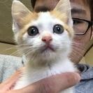 保護の♀の子猫の飼い主様募集!