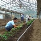 正社員募集★農業に興味のある方歓迎!
