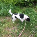 うのちゃん・生後4ヶ月の女の子 - 犬