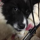 うのちゃん・生後4ヶ月の女の子 − 栃木県