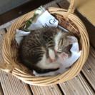 ☆オスの子猫☆ - 浦添市