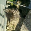 生後1ヶ月くらいの子猫 - 猫