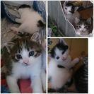 里親さん決定しました。生後一ヶ月くらいの子猫  - 延岡市