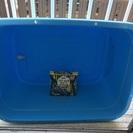 亀の餌と水槽