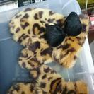 Disny購入豹柄手袋
