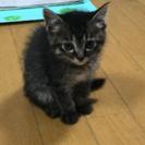 4月7日生まれの仔猫の里親募集‼︎