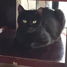 黒猫2歳女の子♀