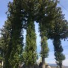 中新川郡‼️伐採、未経験者から、経験者まで募集!