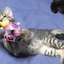 4月4日生まれの子猫5匹の里親募集