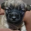 大分県北限定:子犬オス、1ヶ月