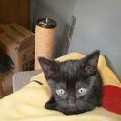 22猫の日に掲載して即日良縁に恵まれました。ありがとうございました。