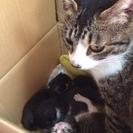 子猫が生まれました(白黒ちゃん決まりました!)