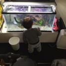 飼えなくなった熱帯魚を購入or引き取ります。