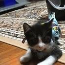 子猫の里親大募集。