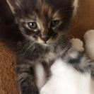 4月13日生まれの子猫