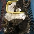 ★産まれたてのかわいい子猫保護してます★