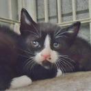 子猫1ヶ月ぐらいの白黒