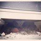 里親さん決まりました「野良の子猫」