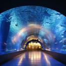 6月10日(6/10)  幻想的な空間を楽しめる!海の生き物見にい...