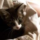 仔猫の里親さんを募集(代筆)