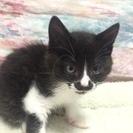 上星川で猫の里親会を開催。子猫がいっぱい。会いに来てください。