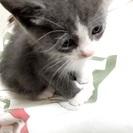 子猫です。至急!